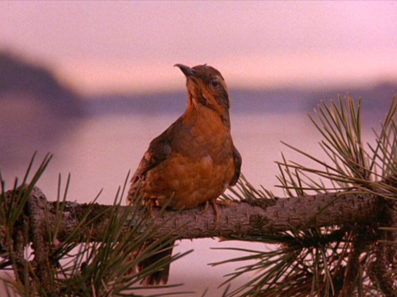 Twin Peaks bird