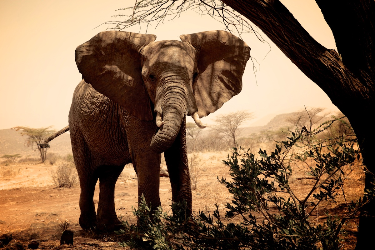 ivory3