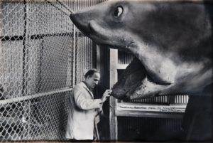 Ingmar Bergman podziwia szczęki